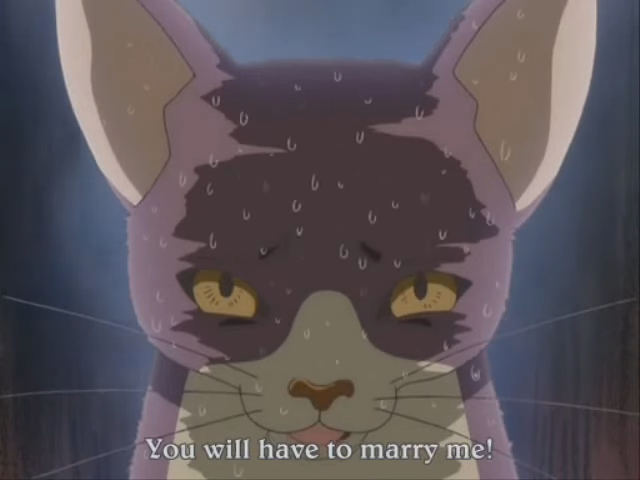And Now You Must Marry Me