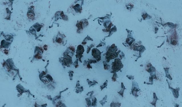 Snow Means Death