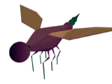 Creature volanti