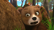 Brent Bear
