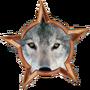 The Boy Who Drew Wolf