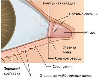 Внутренний угол глазной щели