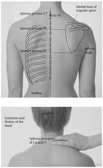 Du-14-Great-Vertebra-DAZHUI-Acupuncture-Points-1