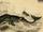 Whales (Puritan States)