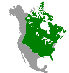 Quebec (Great Poland).png