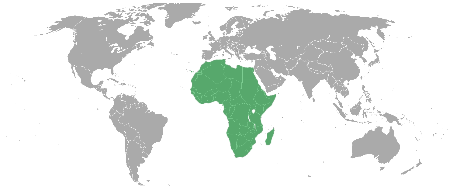 African Union (Asia for the Asiatics!)