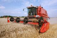 Danish farming - grain production