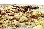 Soldado de infantería en el sector de Monte Aymond, en la Región de Magallanes.jpg