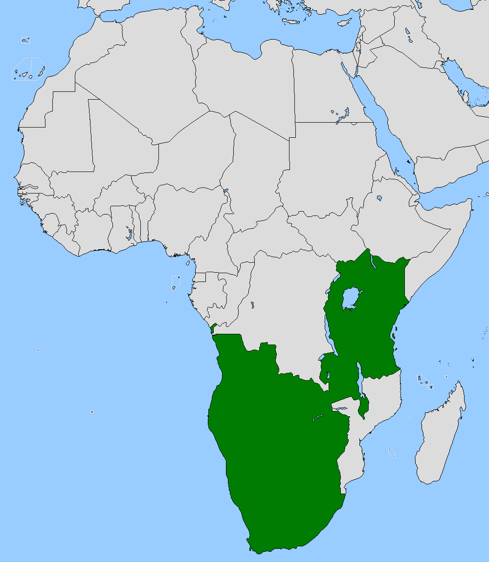 African Union (Axis vs Allies Resurrection).png