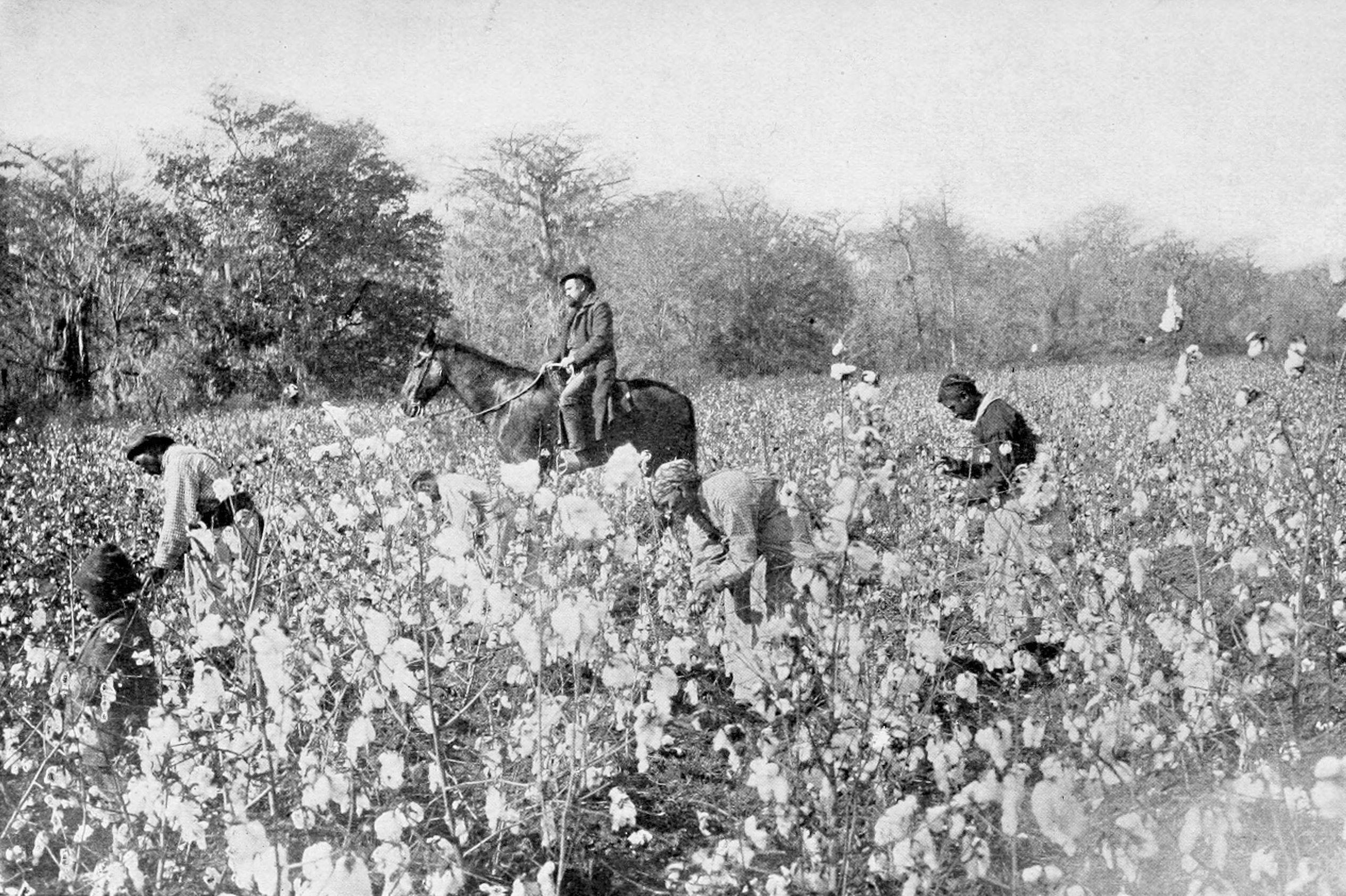 Cotton War (13 Fallen Stars)