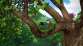 Simón arriba de un árbol