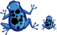 The Dart Frogs