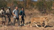 Logan Chris Lion Walking