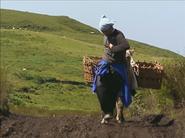 1201-AriStaella-DonkeyWalking