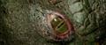 The Lizard's eye