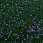 Laura mad sweeney s2 field of flowers.jpg