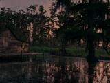 Swamp Shack
