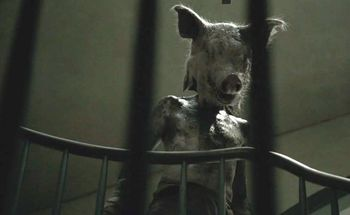 Piggy Man