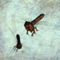 Bolterfly render.png
