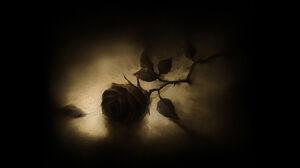 A Rose On the Floor.jpg