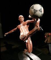 Strip Soccer.jpg