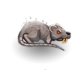 Vapor rat