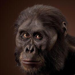 Australopithecus spp reconstruction.jpg