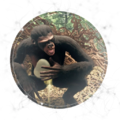 Omnivore - Zygote Food Acclimatization - OM 04.png