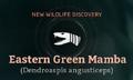 Eastern Green Mamba.png
