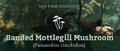 Banded Mottlegill Mushroom (Panaeolus cinctulus).png
