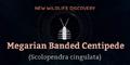 Megarian Banded Centipede.png