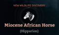 Miocene African Horse.png