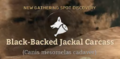 Black-Backed Jackal Carcass.png