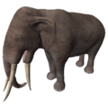 Miocene Elephant (Stegotetrabelodon syrticus).png