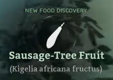 Sausage-Tree Fruit.png