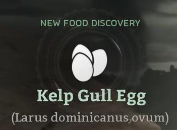 Kelp Gull Egg.png