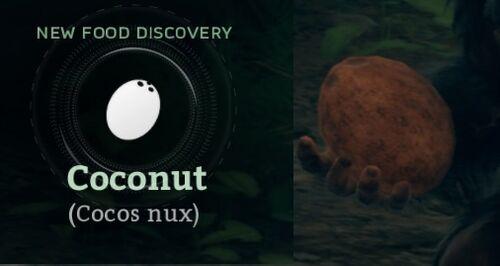 Coconut (Cocos nux).jpg