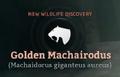 Golden Machairodus.png