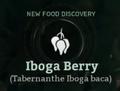 Iboga Berry.png