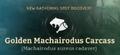 Golden Machairodus Carcass.png