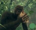 Ape Holding Kapok Fiber.png