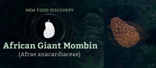 African Giant Mombin (Afrae anacardiaceae).jpg