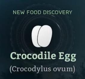 Crocodile Egg.png