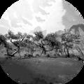 Evolution Feat - Woodlands Master Explorer.png