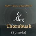 Thornbush.png