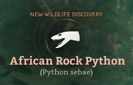 African Rock Python.png