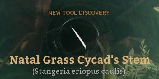 Natal Grass Cycad's Stem.png