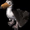 Gull (Larus).png
