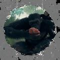 Omnivore - Mammal Food Acclimatization - OM 07.png