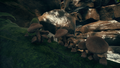 Patch of African Agaric.png